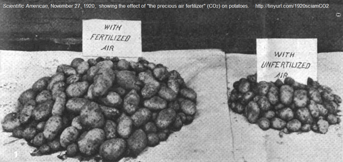 CO2-fertilized potatoes